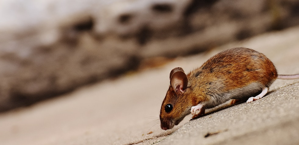 What to Do Before a Pest Control Technician Comes to Your House