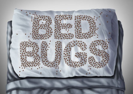 Collecting Strong Evidences When Filing For Bed Bug Hotel Compensation