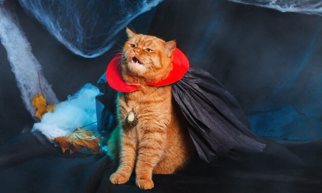 The UK's most popular pet Halloween costumes for 2021!