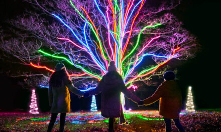 Get Ready to Sparkle with over a million Christmas Lights at Gibside