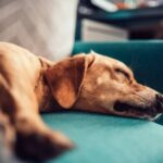 Seizure In Dogs: Its Causes and What You Should Do