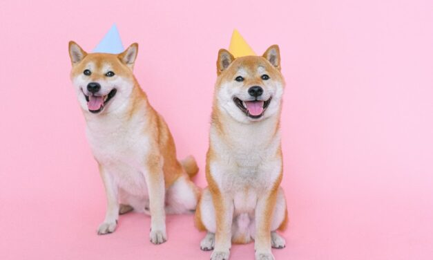 Is DOGE Still Alive? Or is it Killed by Shiba Inu Coin?