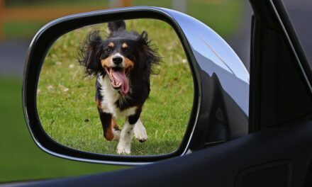 11 Tips For Travelling Safely With A Pet In Your Car